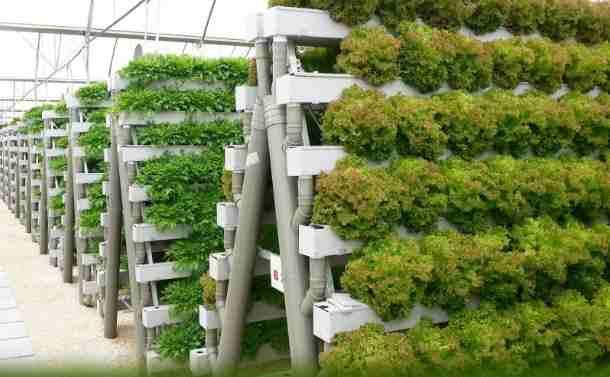 Cara Bercocok Bertanam Hidroponik
