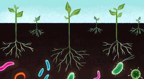Manfaat Mikroorganisme Tanah