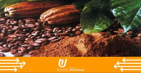 Pengelolahan Biji Kakao Pasca Panen